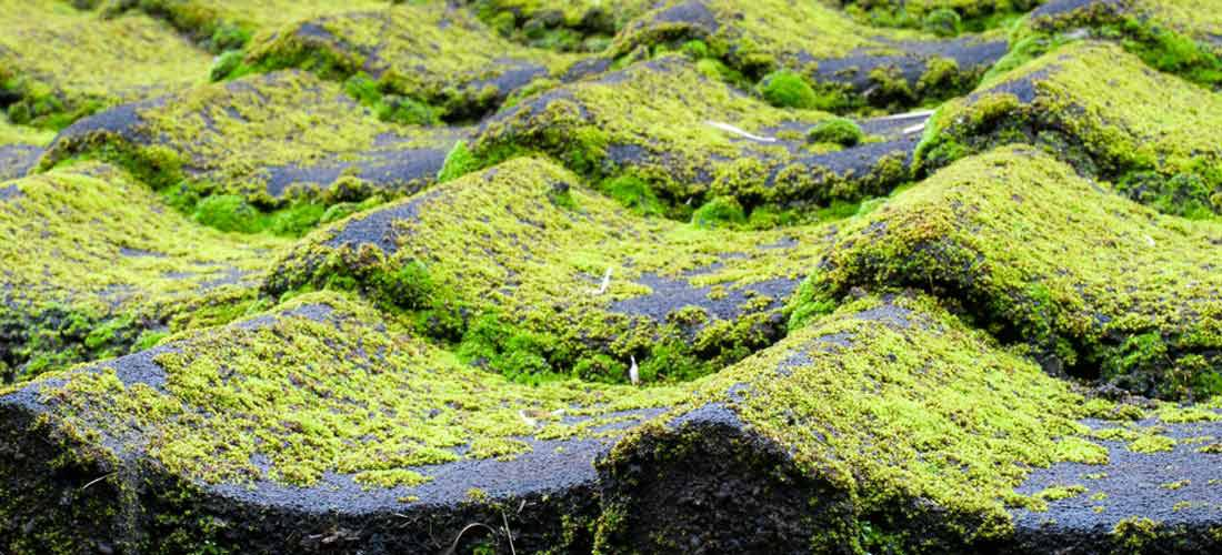 Asphalt-shingle-roofing-algae-resistance